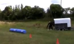 带你见识最训练有素的马